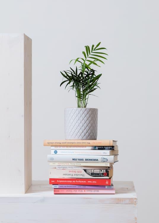 Stilleben mit Büchern und Pflanze